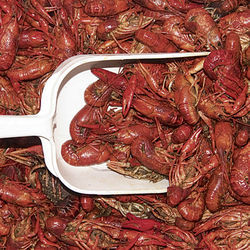 """I would venture to say that they sell as much crawfish in Houston as they do in Louisiana,"" says Jim Gossen."