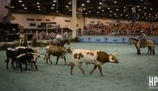 Rodeo Houston: Bulls Go Head to Head at the Longhorn Showdown