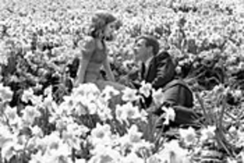 A young Edward (Ewan McGregor) romances Sandra (Alison Lohman) among daffodils conjured just for her.