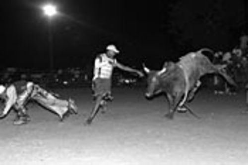 �while clown Wayne Rogers dances with a bull.