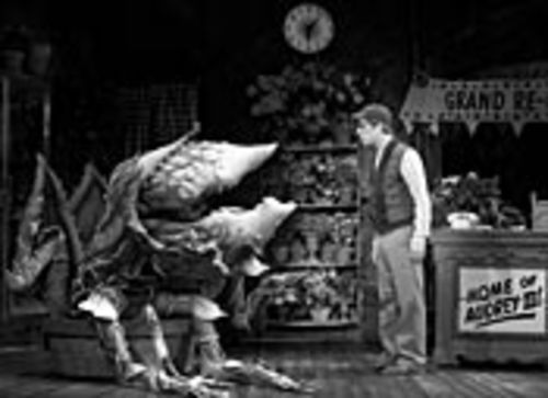 Feed me, Seymour (Anthony Rapp): By the end of  Little Shop of Horrors, Audrey II is more than 18  feet tall and weighs five tons. See Tuesday.