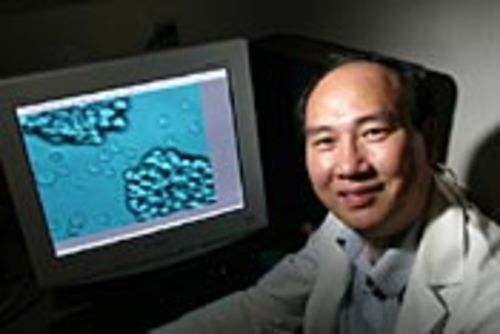 Geng (shown with computer images of stem cells)  says therapeutic cloning advances will prolong life.