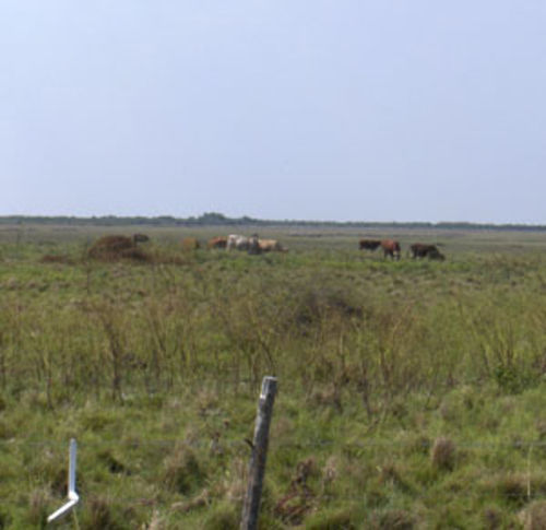 It may look like an empty cow pasture to you, but this is a juicy target for terrorists. Apparently.