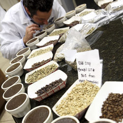 "A coffee ""cupping"" is a formalized tasting that determines the value of green coffee beans."