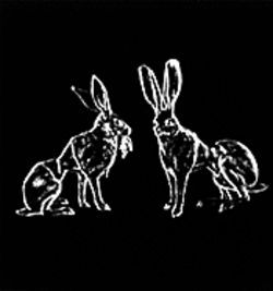 Curious indeed: Michelle Rollman's Hares in Corsets.