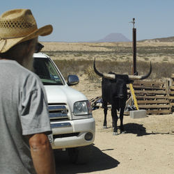 Wells approaches a free-ranging longhorn named Denise, which belongs to a neighbor who lives several miles away.