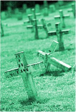 The simple crosses in Joe Byrd Cemetery show the numbers of the inmates and the dates they died. The