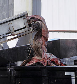 A horse pelt rolls out of Dallas Crown into a Dumpster near houses where children play.