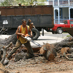 Tree crews have already gone to work in the East End. Broadway — Galveston's gateway to the outside world — is next.