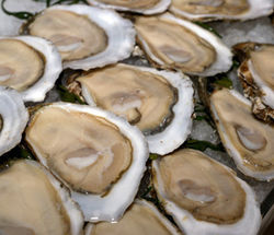The Totten Inlet Virginica (TIV) is the hottest oyster in the country.