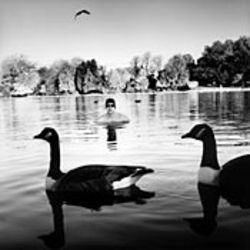 Duck, man: Serpentine Swimming Club II  (2003), Andrew Buurman.