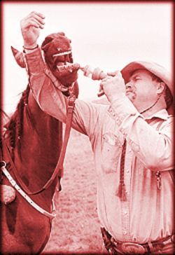 Mark Dial gives a horse a shot of electrolytes.