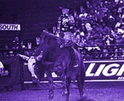 Riding high on an injury-free season, Cody Hart's the bull rider to beat at the Justin Championship.
