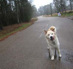 Dogs such as Angel still roam the subdivision's streets unsupervised, though some owners say they now fear retribution.