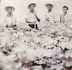 During the bracero program, more than four million Mexicans crossed the border...