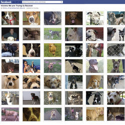 People throughout the country want to know if the dogs they left in Purcell's care are alive or dead. These are just some of those still unaccounted for.