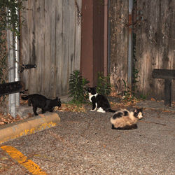 Every night after last call at JR's Bar & Grill, feral cats line up in the parking lot and wait to be fed by the staff.
