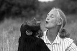 Jane Goodall and a simian singing partner